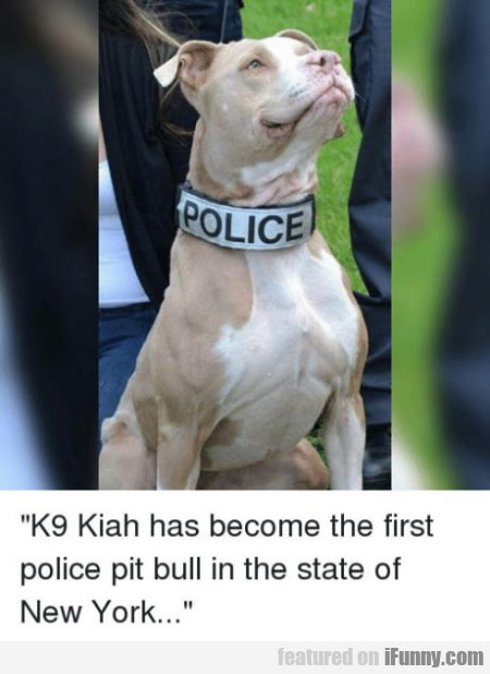 K9 Kiah Has Become The First Police Pit Bull In...