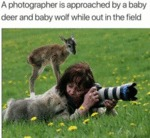 A Photographer Is Approached By A Baby Deer And...