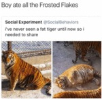 Boy Ate All The Frosted Flakes...