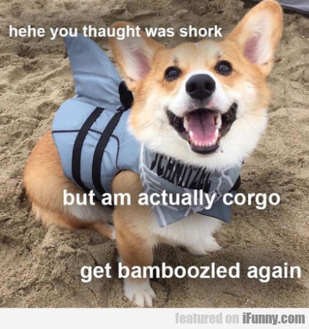 Hehe You Thaught Was Shork - But Am Actually...