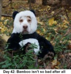 Day 42 - Bamboo Isn't So Bad After All