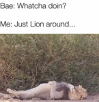 Bae: Whatcha Doin? - Me: Just Lion Around.