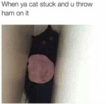 When Ya Cat Stuck And U Throw Ham On It...