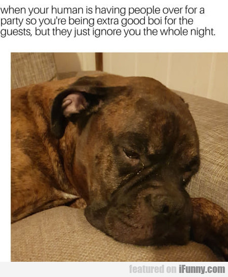 When Your Human Is Having People Over For A...