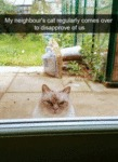 My Neighbour's Cat Comes Over To Disapprove...