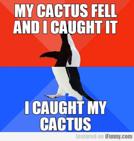 My Cactus Fell And I Caught It - I Caught...