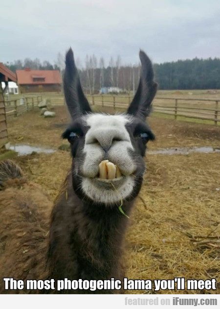 The Most Photogenic Lama You'll Meet