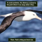 To Avoid Predation, The Albatross Evolved To...