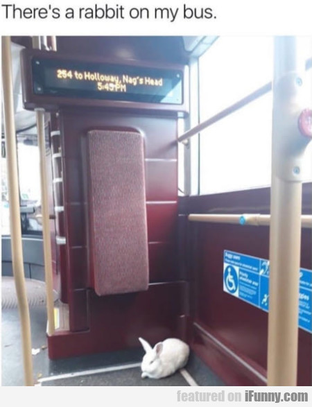 There's A Rabbit On My Bus