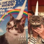 Unicorn Horn - Cats Love It!