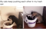 My Cats Keep Pushing Each Other In My Trash Can...