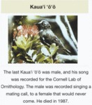 The Last Kauai Was Male And His Song Was...