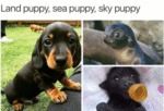 Land Puppy, Sea Puppy, Sky Puppy