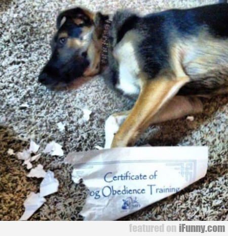 Certificate Of Dog Obedience Training