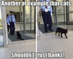 Another Of Example That Cats Shouldn't Trust Banks