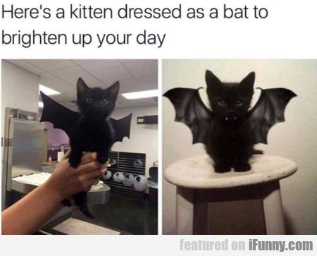 Here's A Kitten Dressed As A Bat To Brighten...