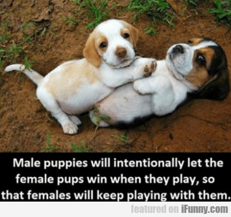 Male Puppies Will Intentionally Let The Female...