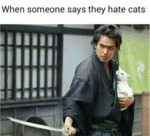 When Someone Says They Hate Cats..