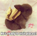 He's Ready To Visit Places!