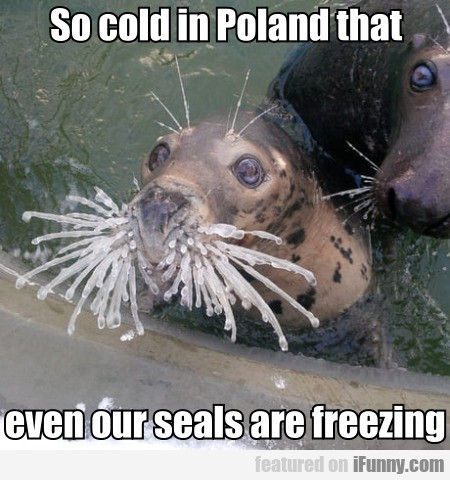 So cold in Poland that even our seals are freezing