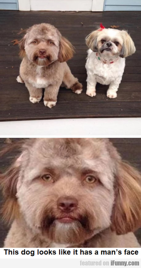 This Dog Looks Like It Has A Man's Face