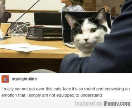 I Really Cannot Get Over This Cats Face...