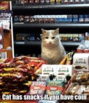 Cat Has Snacks If You Have Coin