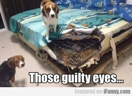 Those Guilty Eyes