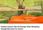 Donkey Causes 5k Of Damage After Mistaking...