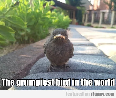 The Grumpiest Bird In The World