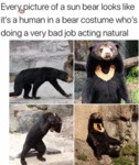 Every Picture Of A Sun Bear Looks Like It's A...