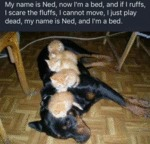 My Name Is Ned, Now I'm A Bed, And If I...