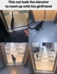 This Cat Took The Elevator To Meet Up With...