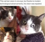 This Cat Lost Vision In One Eye, But Thanks To...