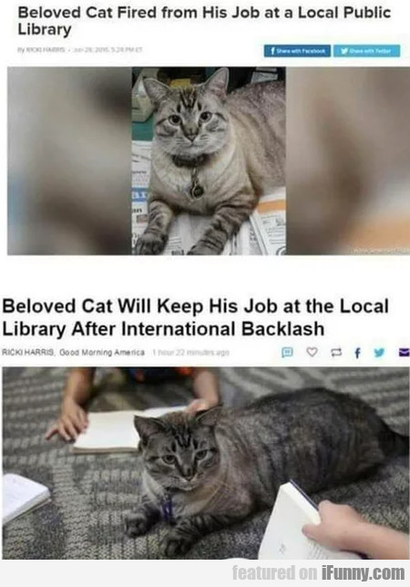 Beloved Cat Fired From His Job At A Local Public..