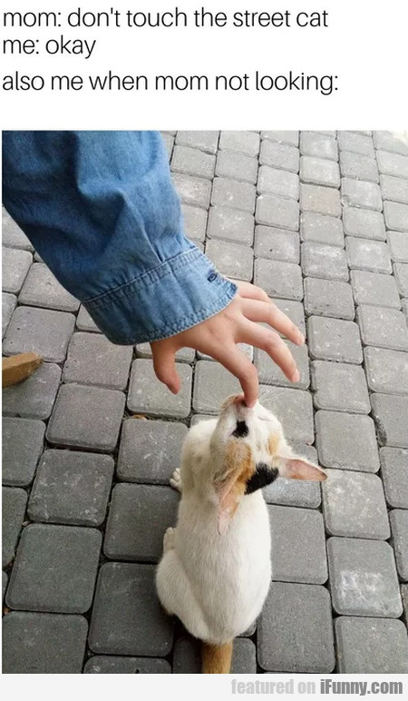 Mom - Don't Touch The Street Cat...