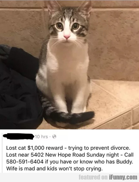 Lost Cat $1000 Reward - Trying To Prevent...