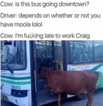 Cow: Is This Bus Going Downtown? - Driver: