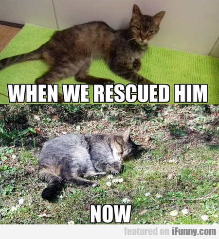 When We Rescued Him - Now.