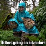 Kitters Going An Adventure