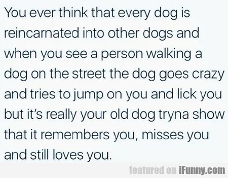 You Ever Think That Every Dog Is Reincarnated...
