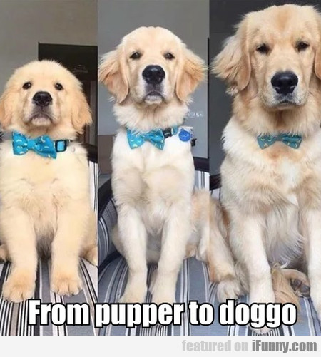 From Pupper To Doggo