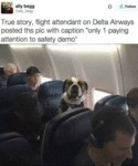 True Story, Flight Attendant On Delta Airways...