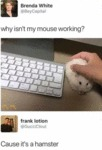 Why Isn't My Mouse Working - Cause It's A...