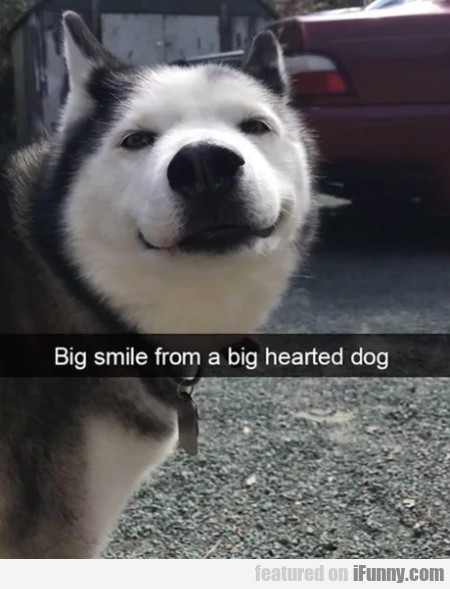 Big Smile From A Big Hearted Dog