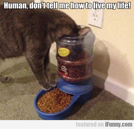 Human, Don't Tell Me How To Live My Life!