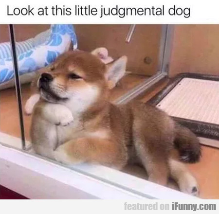 Look At This Little Judgemental Dog