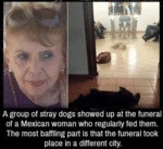 A Group Of Stray Dogs Shower Up At The Funeral...