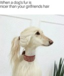 When A Dog's Fur Is Nicer Than Your Girlfriends...