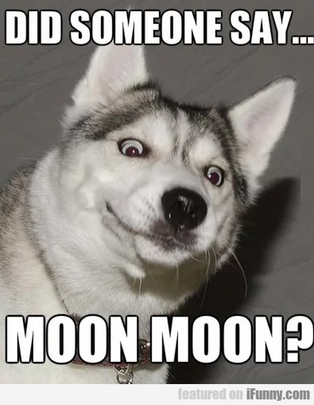 Did Someone Say... Moon Moon